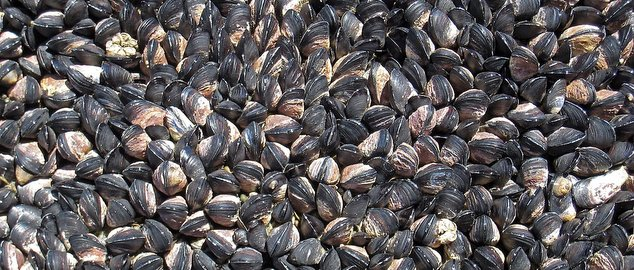 Novéquilibres : En octobre, au menu : on sort des moules !